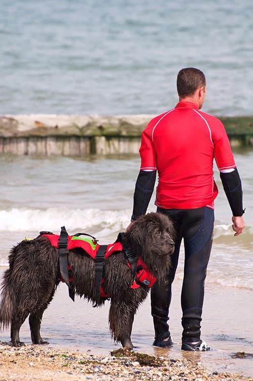 Newfoundland Lifeguard