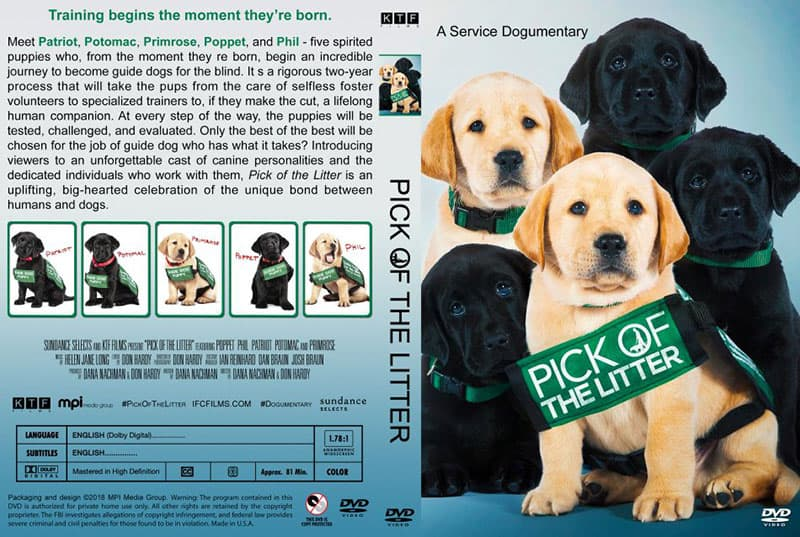 Pick of the Litter movie - a Service Dogumentary